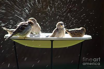 Bird Bathing Spree Art Print by Gordon Wood