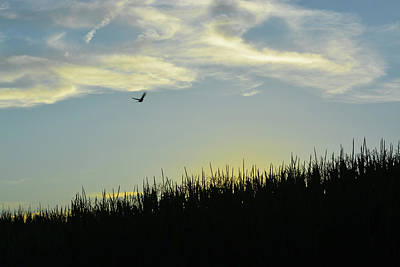 Photograph - Bird Between Sky And Earth by Tana Reiff