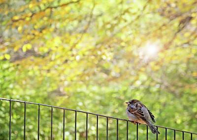 Autumn Photograph - Bird, Central Park, New York City by Brooke T Ryan