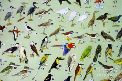 Photograph - Bird Chart by Randall Weidner