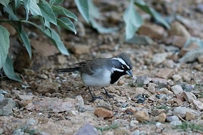 Photograph - Bird  by Christy Pooschke