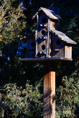 Photograph - Bird Condos by Robert WK Clark
