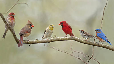Male Northern Cardinal Photograph - Bird Congregation by Bonnie Barry