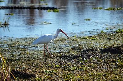 Photograph - Bird Crosing  by Joseph Caban