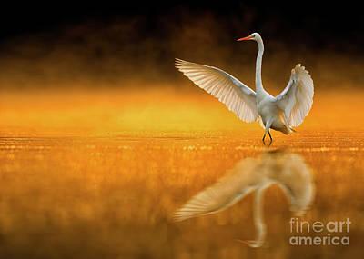 Bird Dance Original