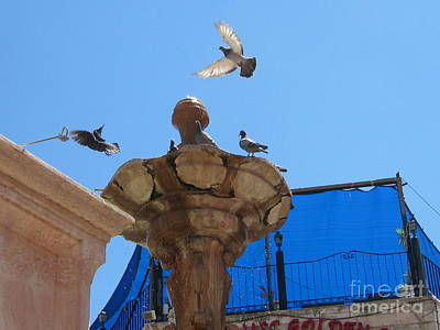 Photograph - Bird Dancer Old Jerusalem Market #2 by Donna L Munro
