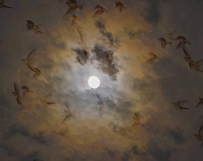 Cedar Waxing Photograph - Bird Dreams by Sue McGlothlin