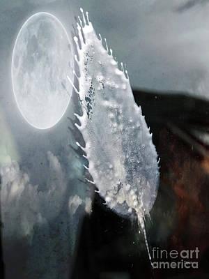 Shit Wall Art - Photograph - Bird Droppings Like A Leaf  by Steven Digman