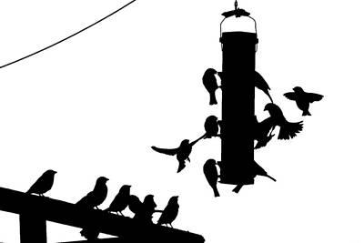 Photograph - Bird Feeder by Andrew Kubica