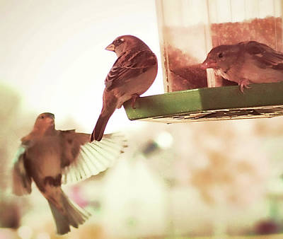 Photograph - Bird Feeder Fellowship by Aliceann Carlton