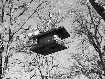Photograph - Bird Feeder From A String by James Granberry