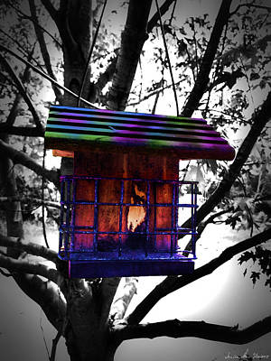 Photograph - Bird Feeder by Iowan Stone-Flowers