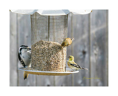 Photograph - Bird Feeding Station by Edward Peterson