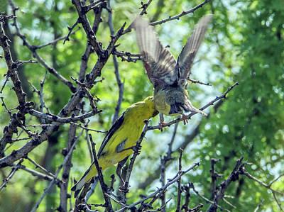 Photograph - Bird Feeding by Tam Ryan