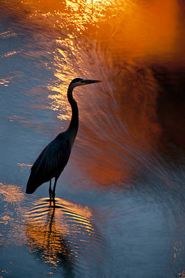 Bird Fishing At Sundown Art Print by Williams-Cairns Photography LLC