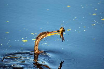 Photograph - Bird Fishing by Joseph Caban