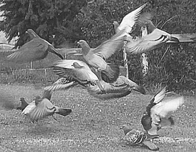 Photograph - Bird Flurry by Suzy Piatt