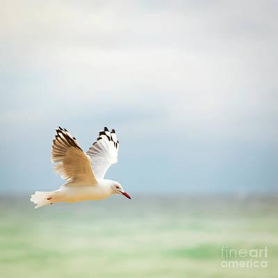 Pasta Al Dente - Bird Flying Over Ocean by THP Creative