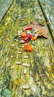 Photograph - Bird Food by Isabella F Abbie Shores FRSA