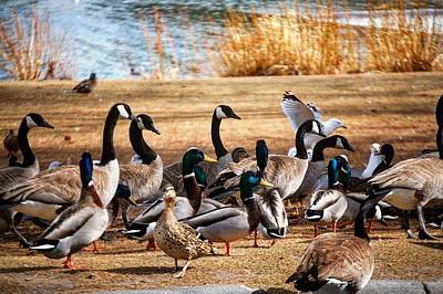 Bird Gang Wars Art Print
