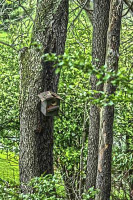 Photograph - Bird House by Daniel Houghton