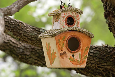 Photograph - Bird House by Jill Lang