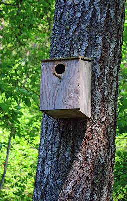 Photograph - Bird House by Tikvah's Hope