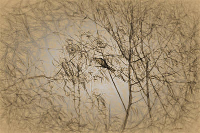 Digital Art - Bird In A Tree Iv by Cathy Jourdan