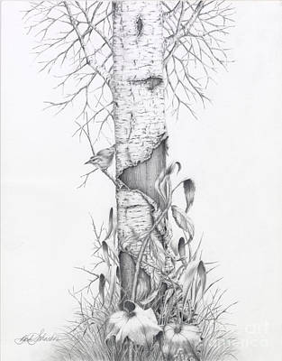 Drawing - Bird In Birch Tree by Barb Schacher