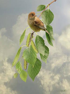 Bunting Digital Art - Bird In Birch Tree by Spadecaller