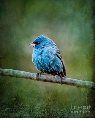 Bird In Blue Indigo Bunting Ginkelmier Inspired Art Print
