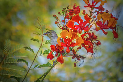 Photograph - Bird In Bush by Mark Dunton