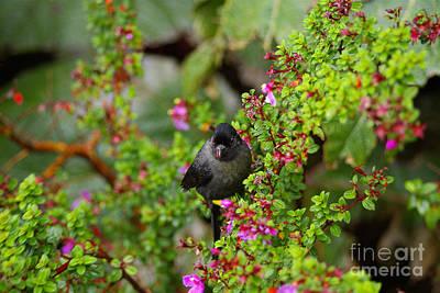 Western Art - Bird in Bush by Paul  Gerace