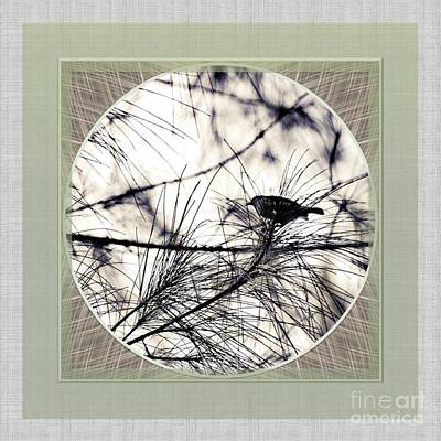 Photograph - Bird In Casuarina by Darla Wood