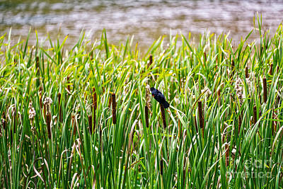 Photograph - Bird In Cattails by Paul Mashburn