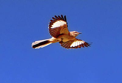 Photograph - Bird In Flight 005 by George Bostian