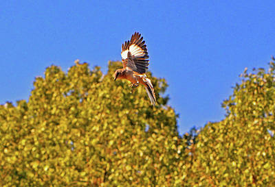 Photograph - Bird In Flight 006 by George Bostian