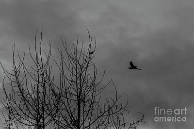 Photograph - Bird In Flight by Jim Corwin