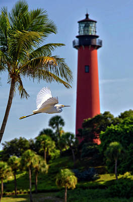 Bird In Flight Under Jupiter Lighthouse, Florida Art Print