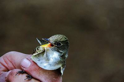 Photograph - Bird In Hand by Randy J Heath