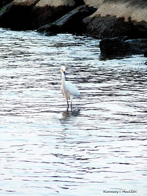 Photograph - Bird In The Bay by Kimmary I MacLean