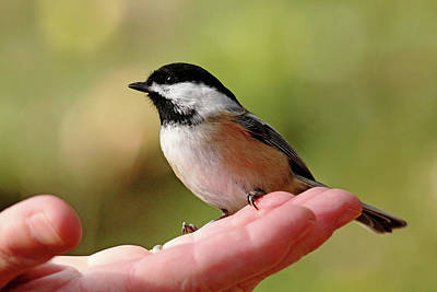 Photograph - Bird In The Hand by Debbie Oppermann