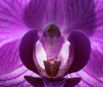 Photograph - Bird In The Orchid by Richard Thomas