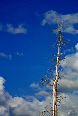 Photograph - Bird In Tree by Carrie Putz