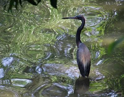 Photograph - Bird In Water by Monique Montney