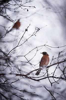 Photograph - Bird In Winter by Frederico Borges