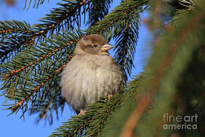 Photograph - Bird In Winter by Ludek Sagi Lukac
