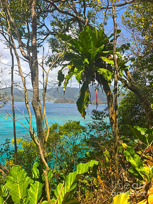 Photograph - Bird Island Little Tobago  by Carey Chen