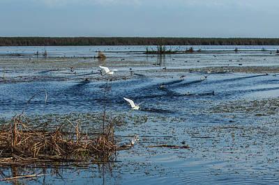 Photograph - Bird Life, Lake Okeechobee by Richard Goldman