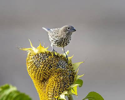 Photograph - Bird Lunch by John Brink